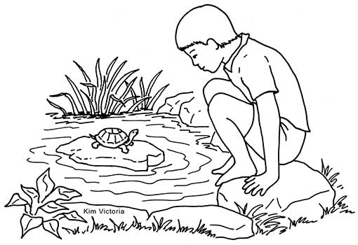 Turtle-Pond-Boy-W350